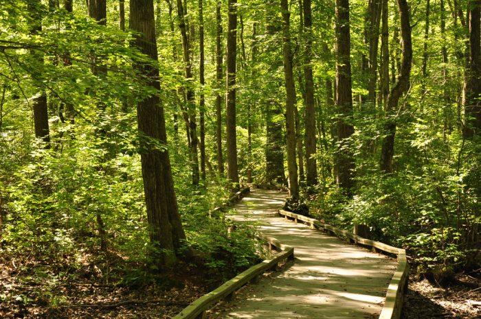 6. Great Swamp National Wildlife Refuge, Basking Ridge