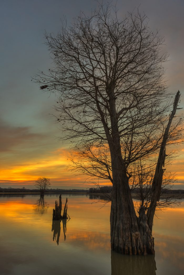 5. This beautiful sunrise was captured during the winter at a cypress swamp in the northwestern area of the state.