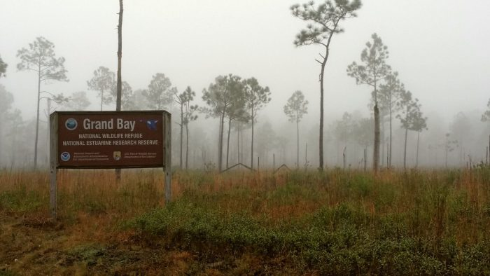 The Grand Bay National Estuarine Research Reserve is located near the small community of Pecan in Jackson County.