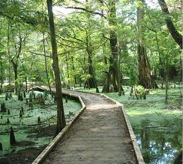 5. The Greenville Cypress Preserve, Greenville