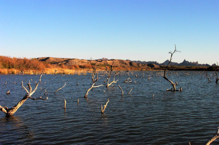 6. One of several marshes in this area of the state, Havasu National Wildlife Refuge in Topock is perfect for canoeing, wildlife photography, and enjoying the scenery.