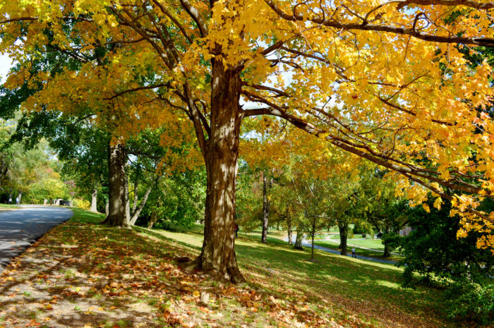 2. Rockford Park, Wilmington