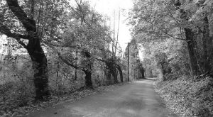 Driving Down This Haunted Pennsylvania Road Will Give You Nightmares
