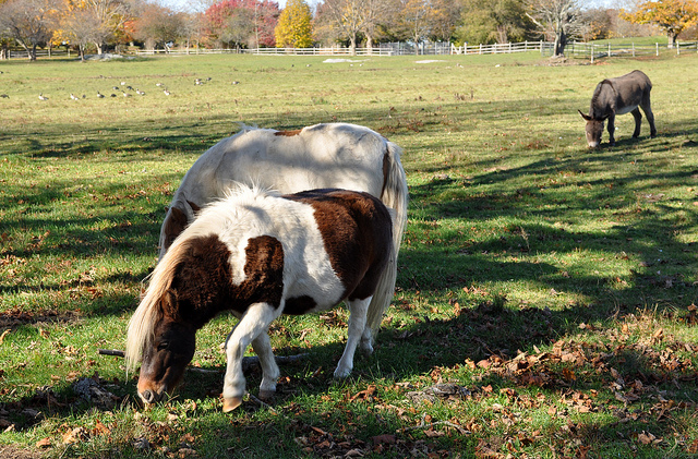 7. Rhode Island is filled with farms with all sorts of animals to visit.