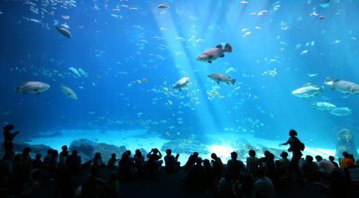 2. Georgia Aquarium Tour - Atlanta