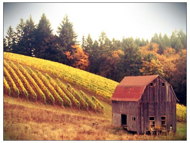 1. Willamette Valley Wine Tour
