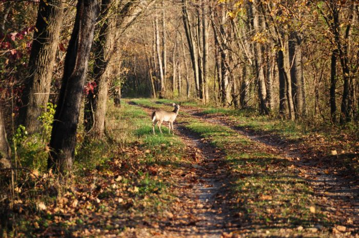 2. This woodland creature was photographed on the C&O Canal towpath.