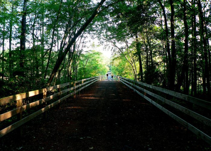 7. Junction and Breakwater Trail - Cape Henlopen State Park