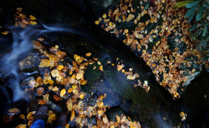 9. Greasy Creek Falls—Black Rock Mountain