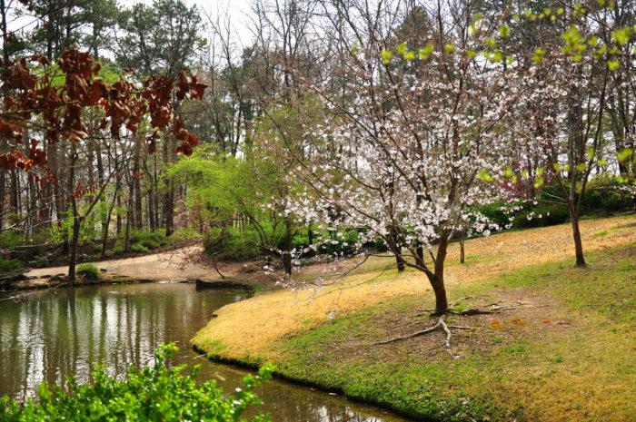 4. Garvan Woodland Gardens