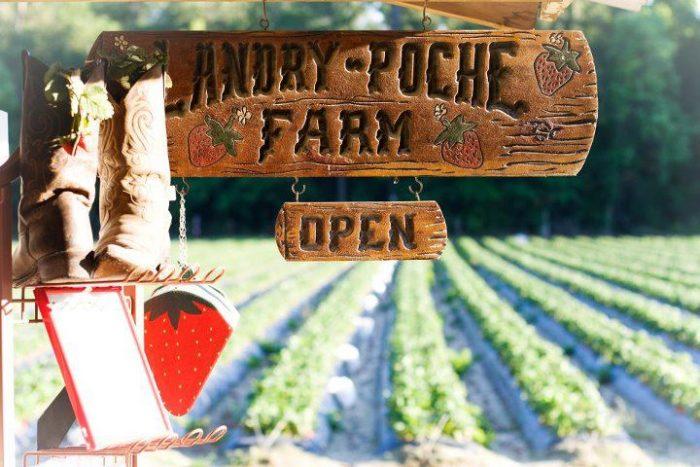 3. Landry-Poche Farms, Holden, LA