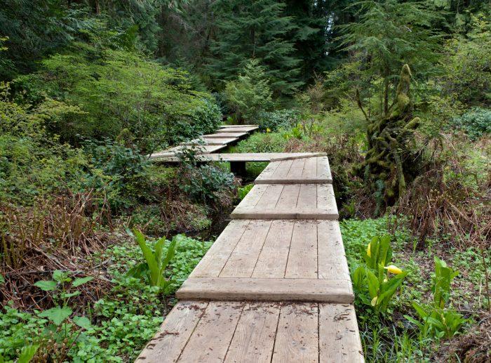 Walking through the woods: