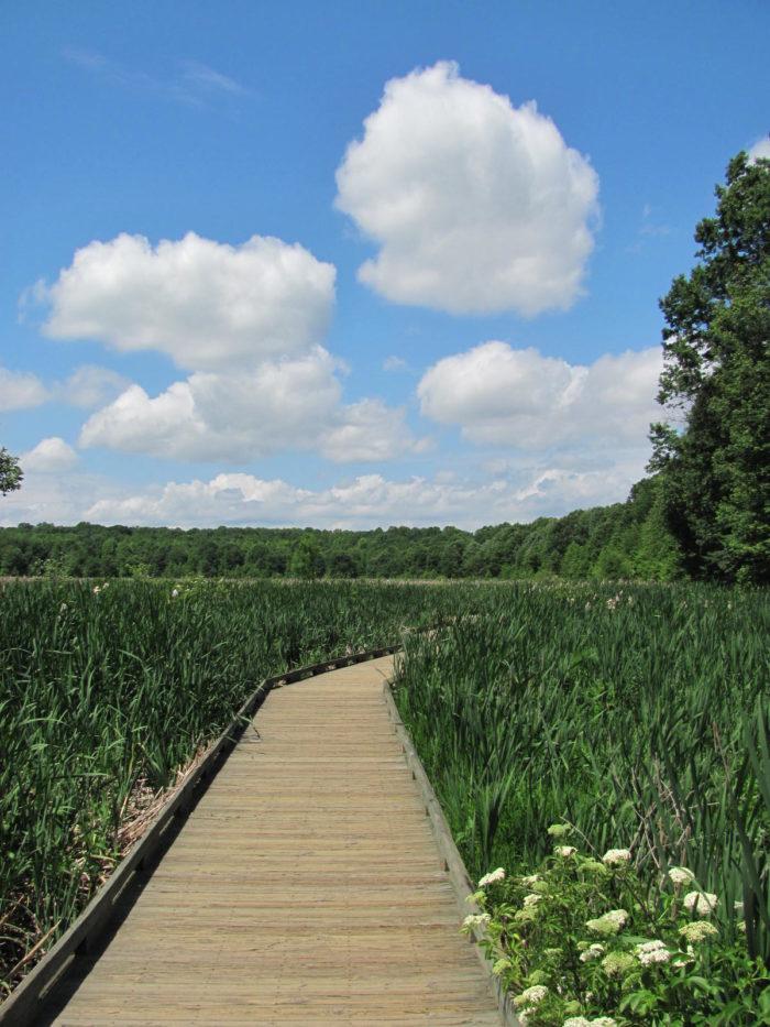 8. Huntley Meadows