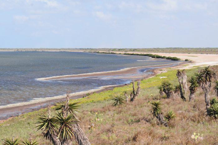 2. Laguna Atascosa Refuge