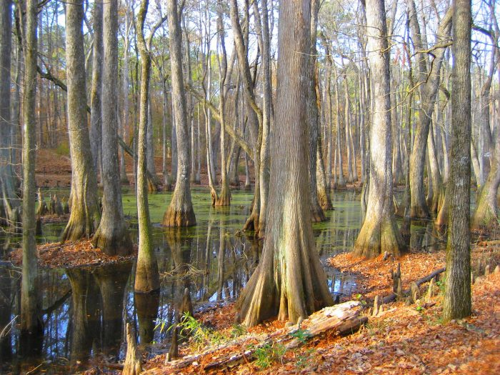6. Gorgeous doesn't even begin to describe this tranquil cypress swamp, which was photographed in 2011.