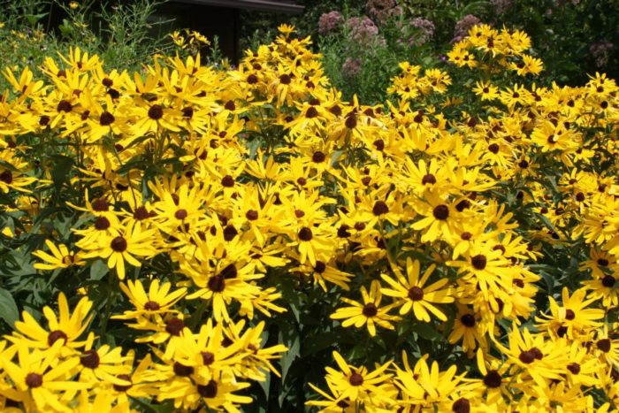 The stunning park promises so much to do no matter what time of the year you visit. The wildflowers peak in August.