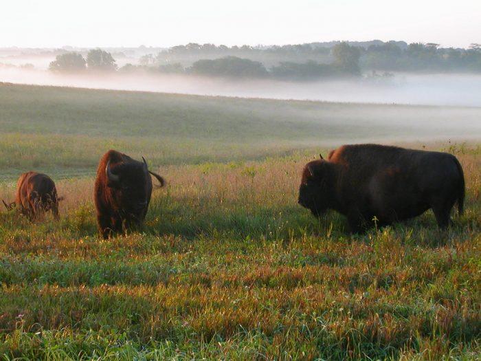 3. Neal Smith National Wildlife Refuge
