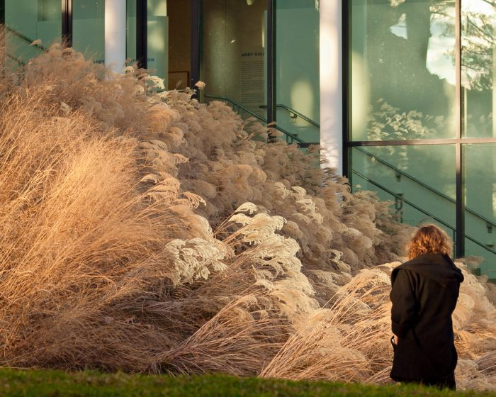 11. In the right light, this decorative grass in Lincoln starts to look like the foamy ocean waves of an alien sea