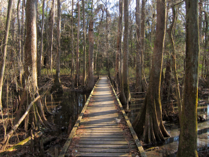 6. Explore the largest tract of old growth hardwood forest in the United States.