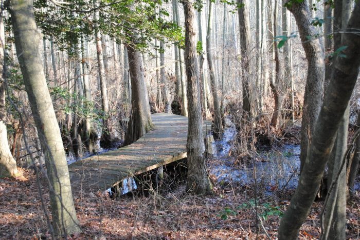 9. The Bob Trail - Trap Pond State Park