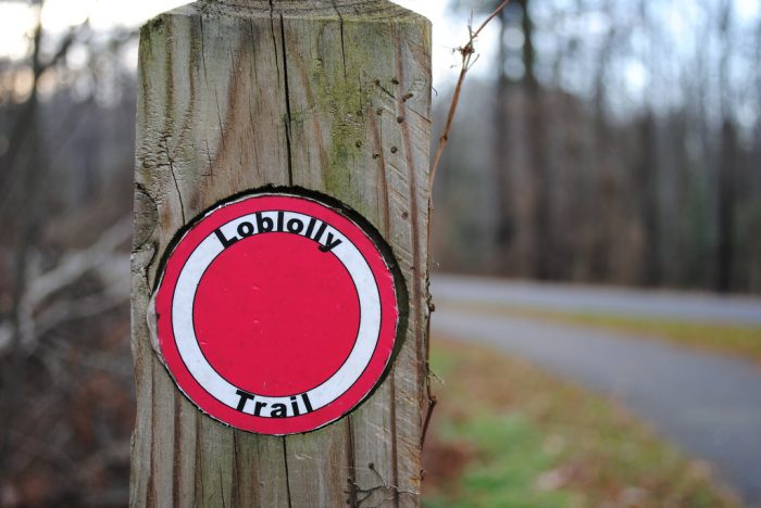 3. The Loblolly Trail - Trap Pond State Park