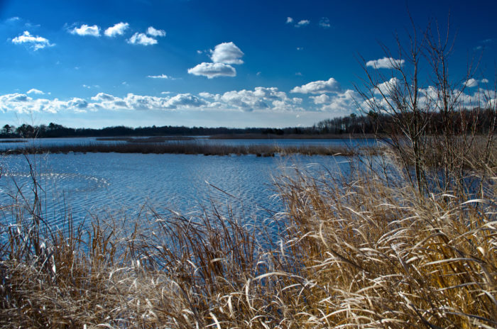13. Prime Hook National Wildlife Preserve