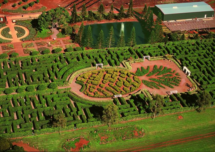 7. Make your way through the world's largest maze at the Dole Plantation.