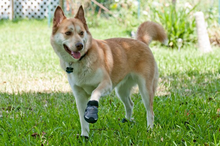 11. Take your dog for walks or a hike in summer - put little shoes on them or wait until after the sun sets.