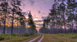 15 Reasons Why Florida Is The World's Greatest Outdoor Classroom