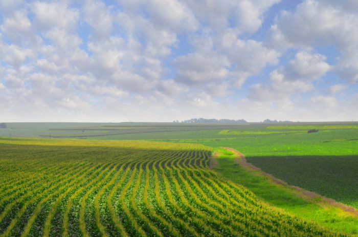 16. The vibrant green of the corn fields