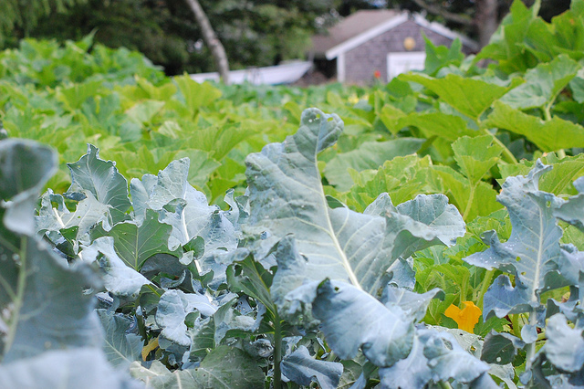 12. This farm in block island grows amazing looking vegetables!