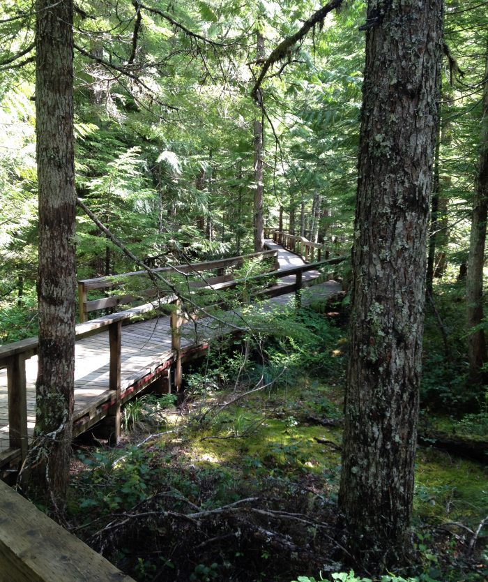 3. Trail of Two Forests (near Mount St. Helens)