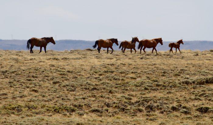 9. Wild Mustangs