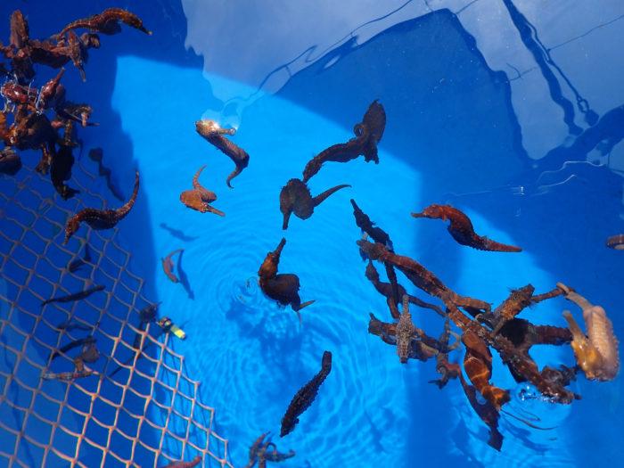 8. Family Friendly Activity: Ocean Rider Seahorse Farm