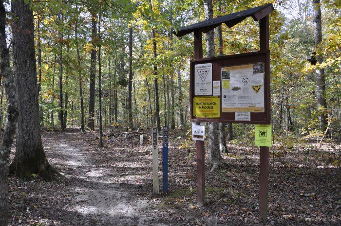 8. Cedarville State Forest (Pond Trail) - Brandywine