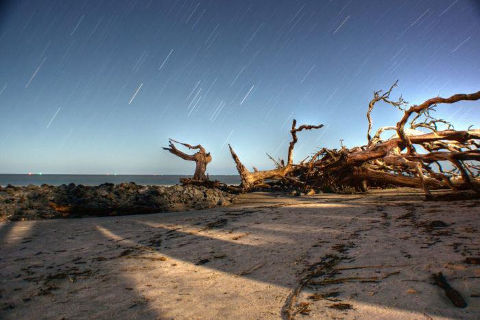 5. Driftwood Beach, Jekyll Island