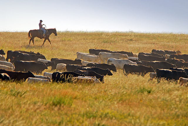 9. ...and with our ranches.