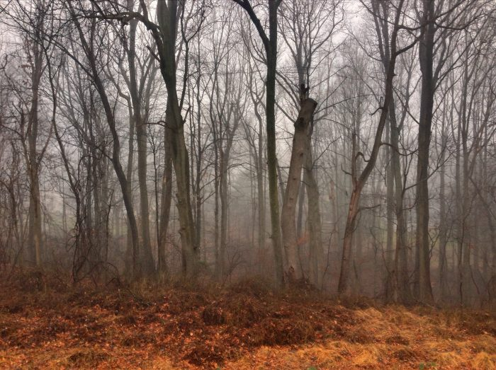 5. This Low Fog in Newark Woods