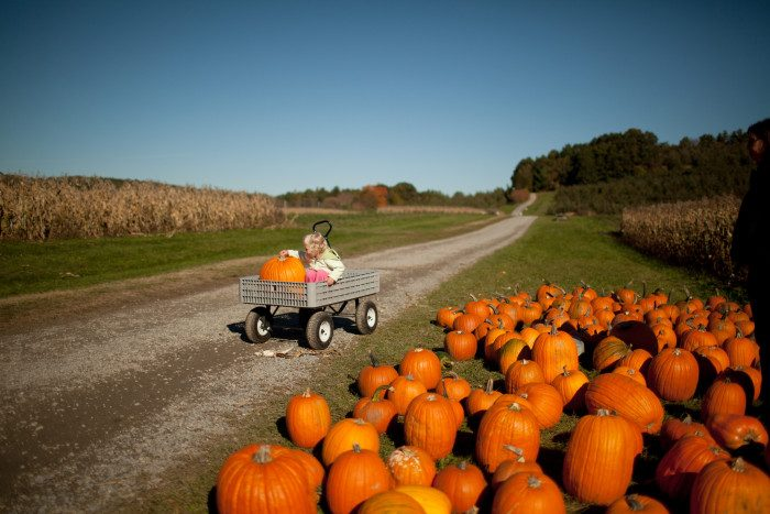 5. Massachusetts: Cider Hills Farm in Amesbury is a family-run farm that offers pick-your-own strawberries, blueberries, raspberries, peaches, plums, nectarines, pears, pumpkins and apples.