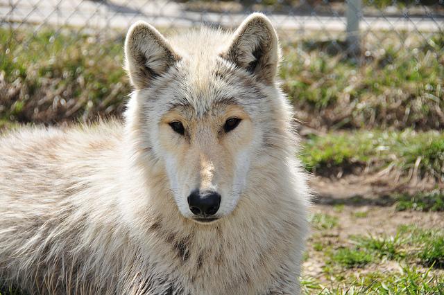 5. Wolf Park - Battle Ground