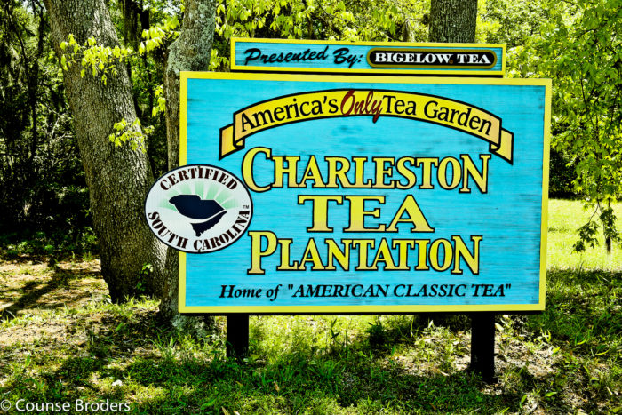 4. Visit the ONLY Tea Plantation in North America.