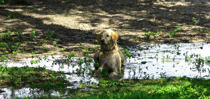 7. Sometimes Mud Puddles Are The Only Way to Cool Off