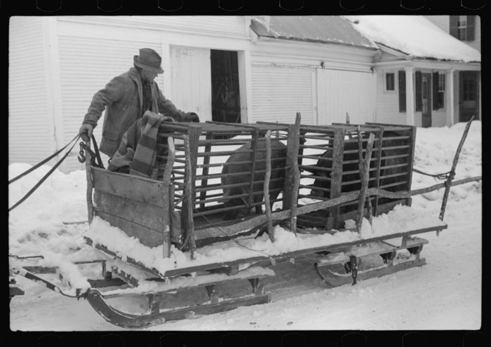 6.  Hauling hogs to be slaughtered.