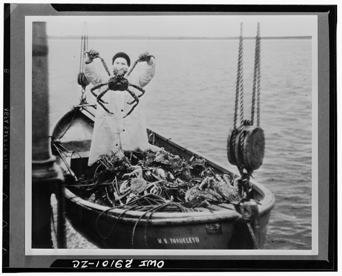 """17. The giant """"King Crab"""" of the Bering Sea was canned commercially in America for the first time in 1935. Prior to this shift, the U.S. imported ninety-five percent of its canned crab meat from Japan."""
