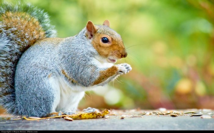 9. Don't even think about worrying about squirrels—in Missouri, it's a no-no.