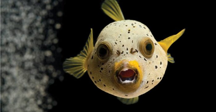 Some of the fish might be surprised to see you...