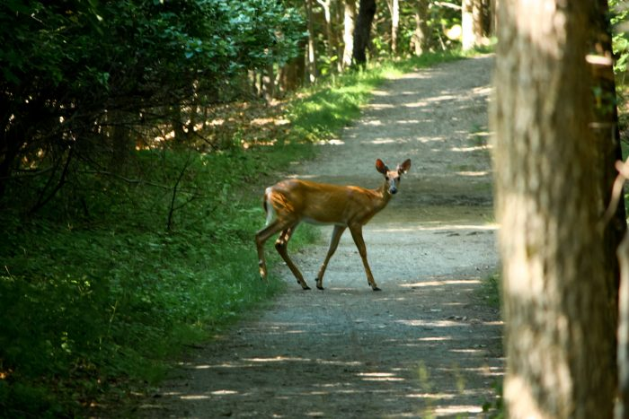 6. Seeing New York wildlife up close and personal is nothing short of a guarantee on this magical island.