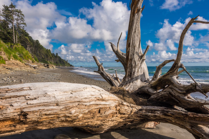 1. The driftwood makes this shot from Kalaloch Beach picture perfect.
