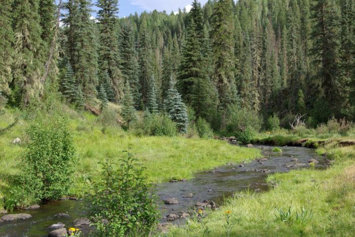8. West Fork Trail #628
