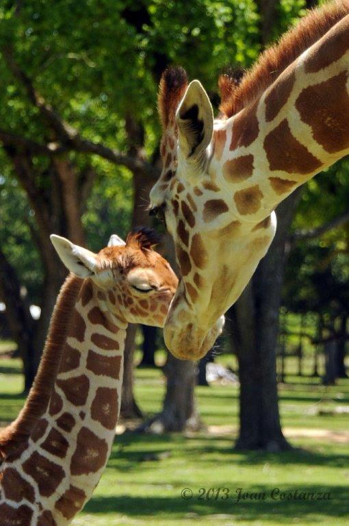 There are some truly amazing animals on the tour, including zebras, parrots, and of course the infamous giraffes.